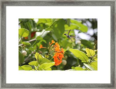 Framed Print featuring the photograph Amber Nectar by David Grant