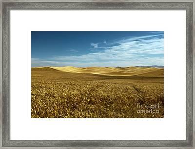 Amber Waves Of Golden Grain Framed Print