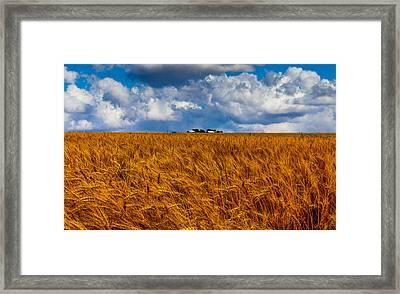 Amber Waves Of Grain Framed Print by Doug Long