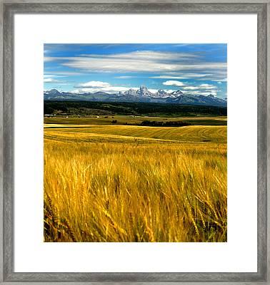 Amber Waves Framed Print by Rusty Enderle