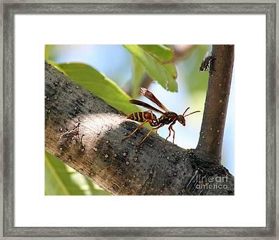 Ambush Framed Print by Billie-Jo Miller