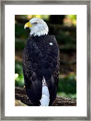 America Bird Framed Print by Eva Thomas