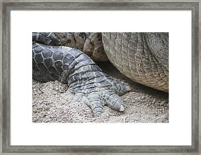 American Aligator  Framed Print by Valia Bradshaw