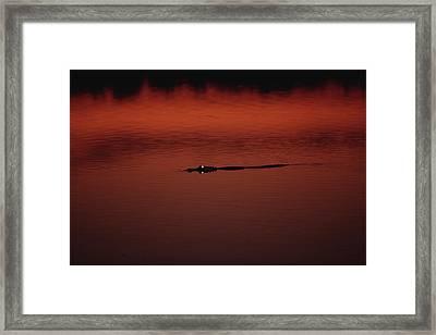 American Alligator Alligator Framed Print by Konrad Wothe