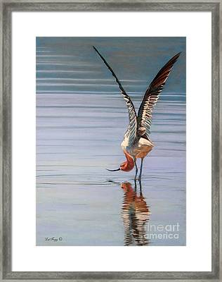 American Avecet Framed Print by Deb LaFogg-Docherty