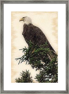 American Bald Eagle In Tree Framed Print