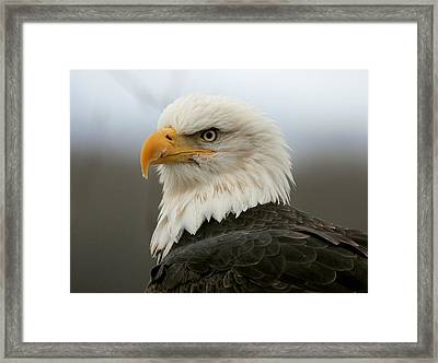 Framed Print featuring the photograph American Bald Eagle Portrait by Myrna Bradshaw