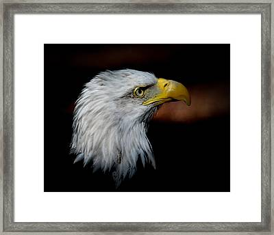 Framed Print featuring the photograph American Bald Eagle by Steve McKinzie