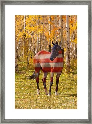 American Bred Framed Print