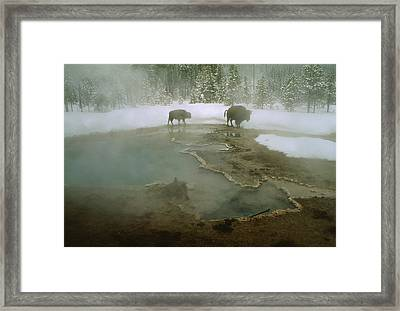 American Buffalo Bison Bison Mill Framed Print by O. Louis Mazzatenta