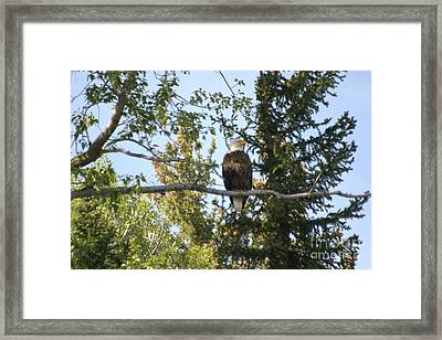 Framed Print featuring the photograph American Eagle by Living Color Photography Lorraine Lynch