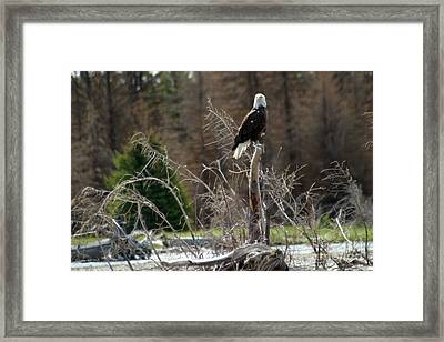 Framed Print featuring the photograph American Eagle On Snake River by Living Color Photography Lorraine Lynch