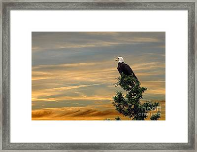 Framed Print featuring the photograph American Eagle Sunset by Dan Friend
