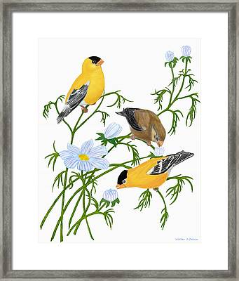 Framed Print featuring the digital art American Goldfinch by Walter Colvin