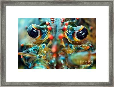 American Lobsters Framed Print