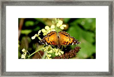 American Painted Lady I Framed Print by Bruce W Krucke