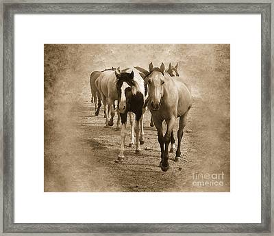 American Quarter Horse Herd In Sepia Framed Print by Betty LaRue