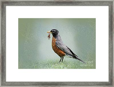 American Robin With Worms Framed Print by Betty LaRue