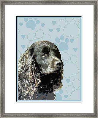 American Water Spaniel Framed Print by One Rude Dawg Orcutt