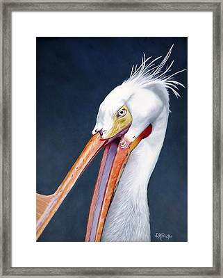 American White Pelican Framed Print by Donna Proctor