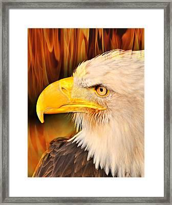 Americasn Bald Eagle Framed Print by Marty Koch