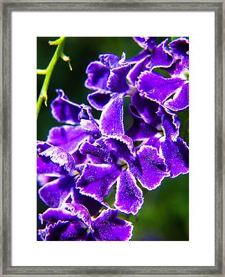 Amethyst Glistens Framed Print by Stacy Michelle Smith