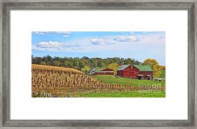 Amish Cornfield Framed Print