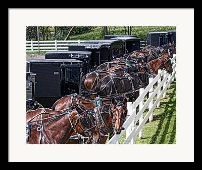 Carriage Team Framed Prints