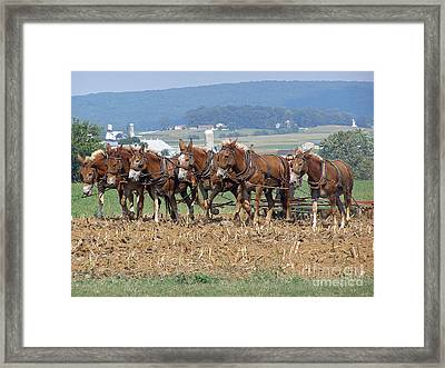 Amish Working Team  Framed Print by Louise Peardon