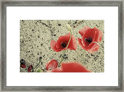Among The Cross Framed Print by Empty Wall