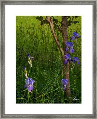 Among The Grasses Framed Print by Julie Grace