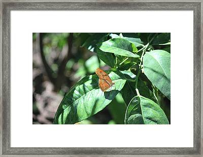 Among The Leaves Framed Print
