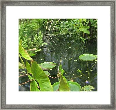 Among The Lily Pads Framed Print