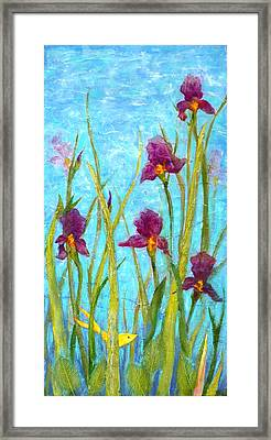 Among The Wild Irises Framed Print by Carla Parris