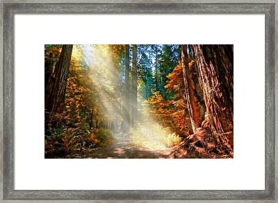 Amongst Giants  Framed Print