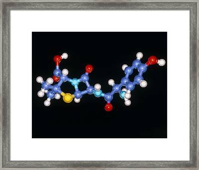 Amoxycillin Drug Molecule Framed Print by Laguna Design
