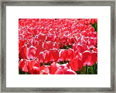 Amsterdam Tulips Framed Print