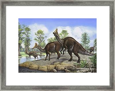Amurosaurus Riabinini Dinosaurs Grazing Framed Print by Sergey Krasovskiy