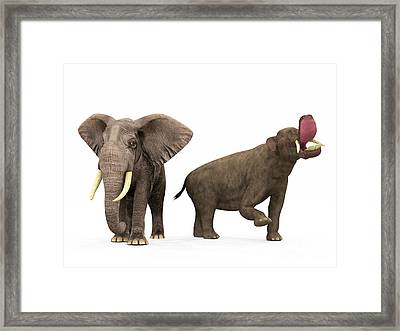 An Adult Platybelodon Compared Framed Print