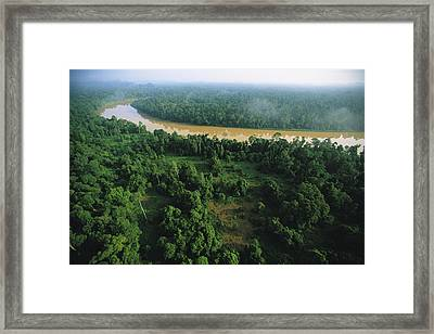 An Aerial View Of Borneo Asian Elephant Framed Print by Tim Laman