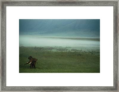 An African Elephant In The Ngorongoro Framed Print by Chris Johns