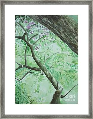 An Afternoon In My Garden Framed Print by Vuong Anh Tuan