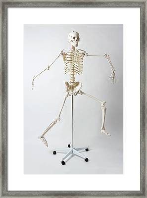 An Anatomical Skeleton Model Running And Jumping Framed Print by Rachel de Joode