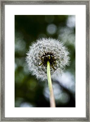 An Ants View Framed Print