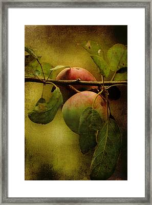 Framed Print featuring the photograph An Apple A Day by Kathleen Holley