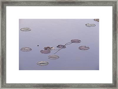 An Artistic Arrangement Of Floating Framed Print by Jason Edwards