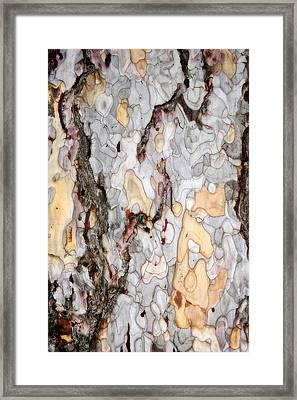 An Bark Of Old Pine Framed Print