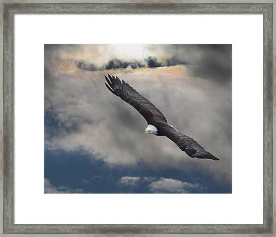 An Eagle In Flight Rising Above The Framed Print by Robert Bartow