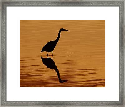 An Early Morning Dip Framed Print by Tony Beck