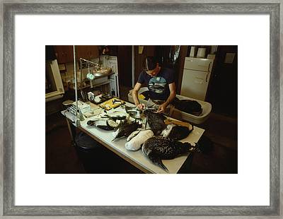 An Ecologist Determines The Cause Framed Print by Michael S. Quinton